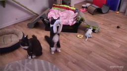 Kitten Rescue Sanctuary in Los Angeles, California. Live webcam streaming.
